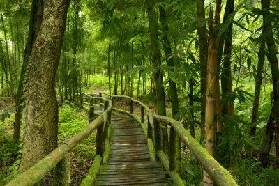 Naklejka Jungla de Tajlandia con Puente de madera