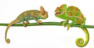Naklejka Kameleony
