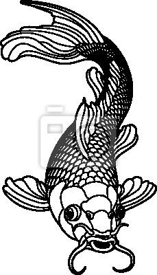 Karp koi czarne i białe ryby
