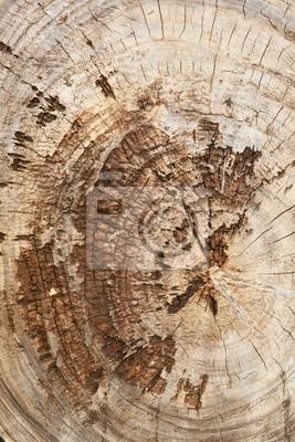 Kikut starego drewna tekowego