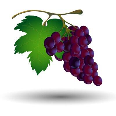 Naklejka Kiść winogron z liści na białym tle