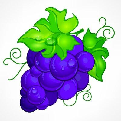Naklejka Klaster niebieski winogron z zielonych liści i kropli wody na białym tle,