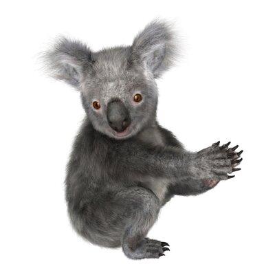 Naklejka koala
