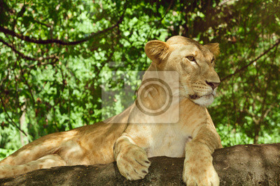 Kobieta lew odpoczynku na skale w zielonych zarośli