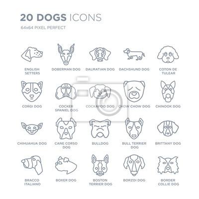 Kolekcja 20 psów liniowych ikon, takich jak pies Seterów angielskich, doberman Boston Terrier Bokser pies linii ikony z cienką kreską, ilustracji wektorowych modny zestaw ikon.