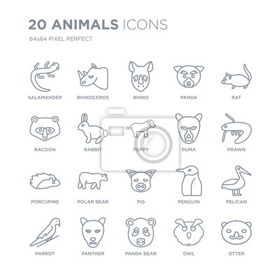 Kolekcja 20 zwierząt liniowych ikon, takich jak salamandra, nosorożec, niedźwiedź panda, pantera, papuga, szczur, puma, świnia, jeżatka ikony linii z cienką kreską, ilustracji wektorowych modny zestaw