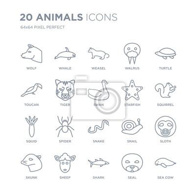 Kolekcja 20 zwierząt liniowych ikon, takich jak wilk, wieloryb, rekin, owca, skunks, żółw, rozgwiazda, wąż, kałamarnica, tygrys ikony linii z cienką kreską, ilustracji wektorowych modny zestaw ikon.