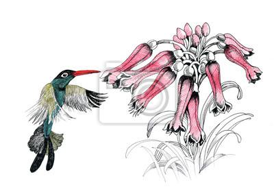 Kolibrów z kwiatami