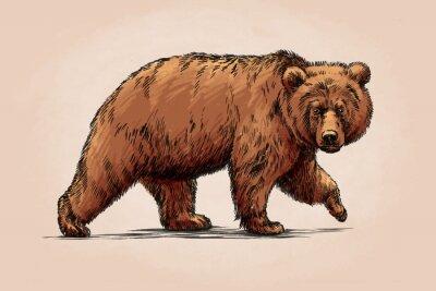 Naklejka Kolor grawerować izolowane grizzly