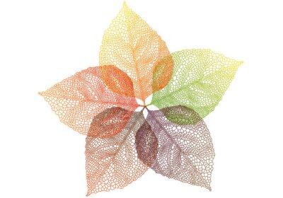 Naklejka Kolorowe jesienne liście, wektor