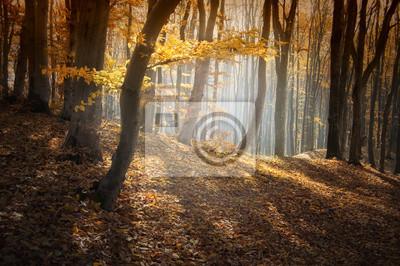 kolorowy las jesienią z promieni słonecznych