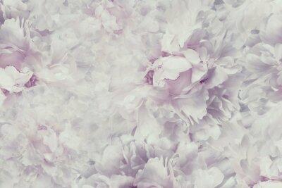 Naklejka Kompozycja kwiatowa. Makro. Natura.