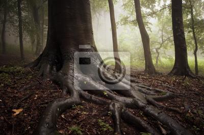 korzenie drzewa w mglisty ciemnym i zielonym lesie
