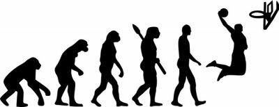 Naklejka Koszykówka Evolution