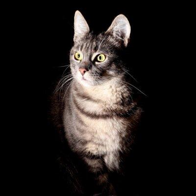 Naklejka Kot, czarne tło