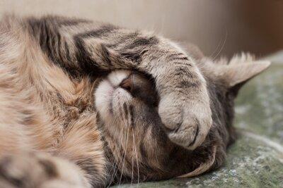 Naklejka kot śpi