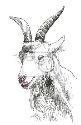 Koza głowy Wyciągnąć rękę na białym tle
