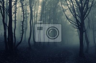krajobraz las z mgły
