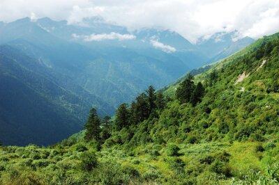 Naklejka krajobraz lasów górskich i doliny