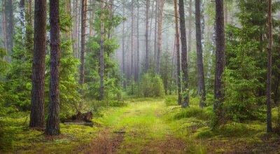 Naklejka Krajobraz lasu przyrody. Zielony letni las