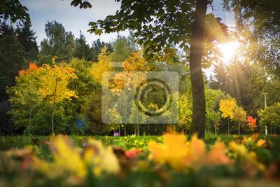 Krajobraz parku jesienią. Stubarwni koloru żółtego i czerwieni liście na trawie, drzewach i świetle słonecznym ,. Spadek. Jesieni tło kolorowa natura. Sceniczny widok na jesień parku.