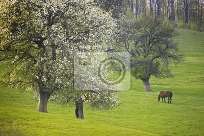 krajobraz z kwiatów drzew i koń