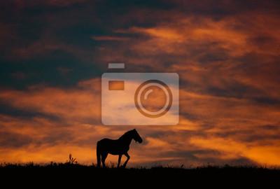 krajobraz zachód słońca z konia i piękne ciepłe kolory