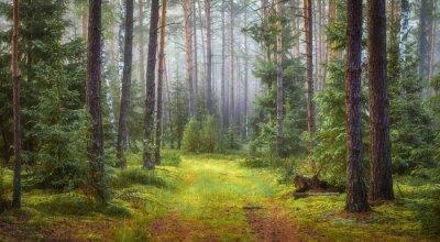 Krajobraz zielonego lasu