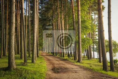 Krajobraz zielony lato las z drogą na brzeg jezioro. Sosnowy park w pobliżu rzeki.