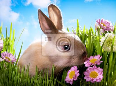 królik Dziecko Wielkanoc na zielonej trawie z wiosennych kwiatów