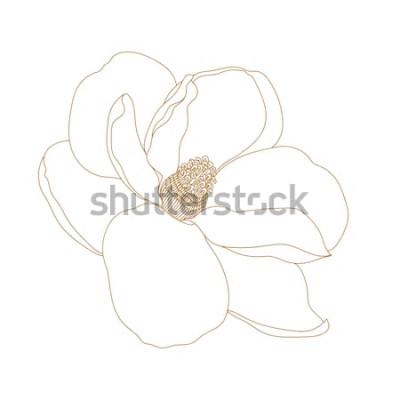 Naklejka Kwiat magnolii, widok z góry, na białym tle. Graficzny ręcznie rysowane kwiaty magnolii. Vector.Magnolia kwiat rysunek i szkic z czarno-białą grafiką.