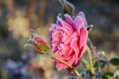 Naklejka kwiaty 529