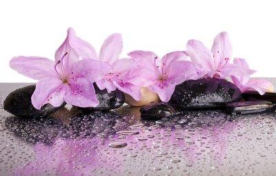 Naklejka kwiaty i czarne kamienie z refleksji