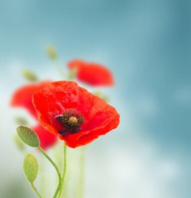 Naklejka Kwiaty maku