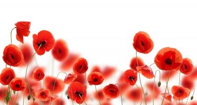 Naklejka Kwiaty maku na jasnym rozświetlonym tle