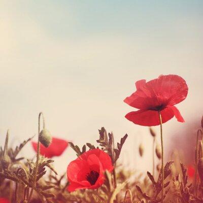 Naklejka kwiaty maku retro stylizowany wizerunek