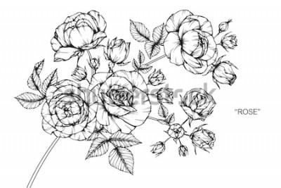 Naklejka Kwiaty róży, rysunek i szkic z grafiką na białym tle.