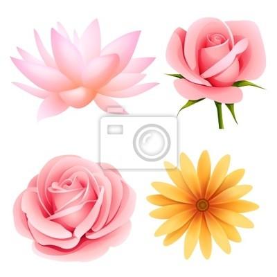 Kwiaty wektor zestaw róży, lotosu, stokrotka na białym