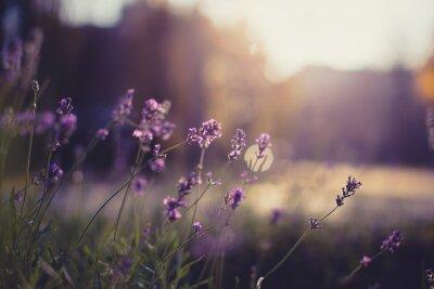 Naklejka kwiaty z bliska
