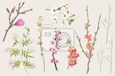 Kwitnący gargen. Wiosenne kwiaty i gałązka. Magnolia, spirea, kwiat wiśni, dereń, jaśmin, pigwa, gałązka brzozy. Ilustracja wektorowa botaniczny rocznika