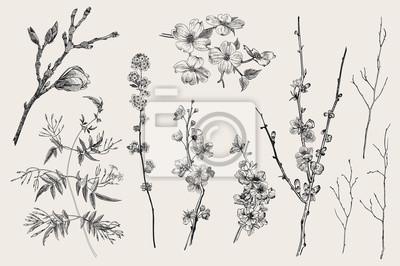 Kwitnący gargen. Wiosenne kwiaty i gałązka. Magnolia, spirea, kwiat wiśni, dereń, jaśmin, pigwa, gałązka brzozy. Ilustracja wektorowa botaniczny rocznika. Czarny i biały