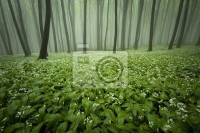 kwitnący las z mgły i kwiaty na ziemi