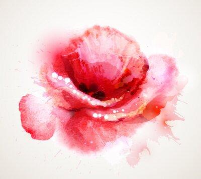 Naklejka Kwitnienia czerwony mak