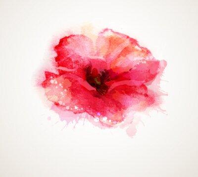 Kwitnienia czerwony mak