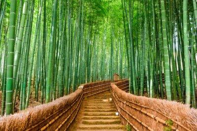 Naklejka Kyoto, Japonia Bamboo Forest