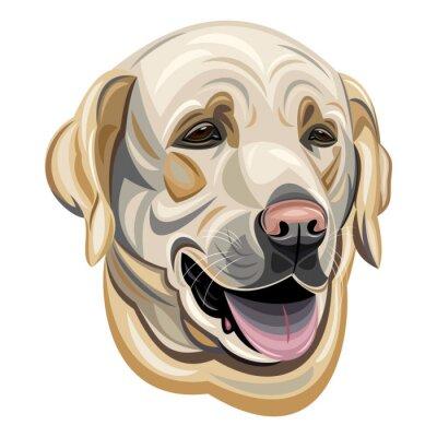 Naklejka Labrador
