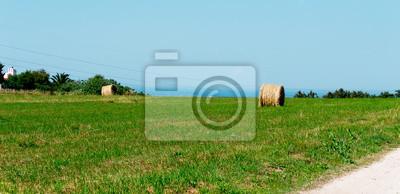 łąka wiosna