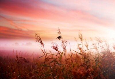 Landscape.Early Foggy Morning Mist .