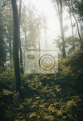 las jesienią na deszczową pogodę