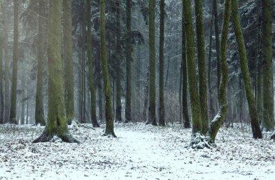 Las w zimie.